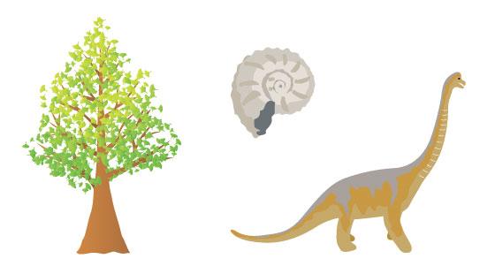 イチョウと恐竜とアンモナイトの化石