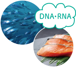 DNA・RNA