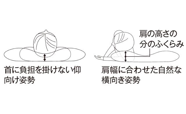 緩やかなふくらみが自然な寝姿勢をキープ