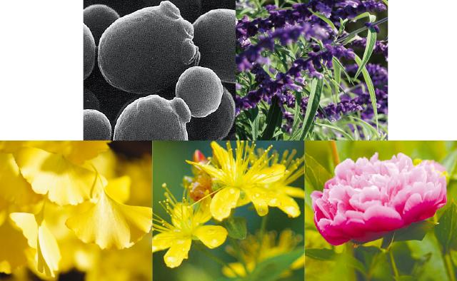 11種類の天然植物素材もたっぷり配合